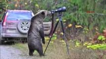 Video:merakli-ayinin-kamera-saskinligi