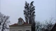 Video:bu-agacta-sizce-kac-kus-var