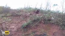 Video:talihsiz-ayi-domuz-kapanina-yakalandi
