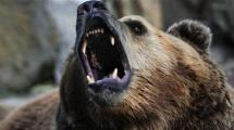 Video:ayi-yasli-ciftciyi-boyle-oldurdu