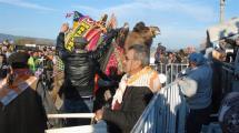 Video:arenaya-sigmayan-develer-izleyenleri-korkuttu