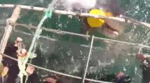 Video:kopekbaligi-az-daha-insan-dolu-kafesi-parcaliyordu