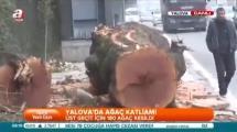 Video:katliam-sonrasi-yalova