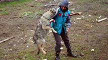 Resim Galeri:yavru-kurtlar-yabanilestiriliyor