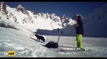 Video:icinizi-isitacak-bir-kopek-hikayesi-sun-dog