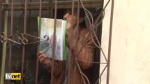 Video:mehdiyim-ben-dedi-3-polisi-yaraladi