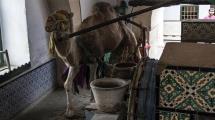 Resim Galeri:bu-kuyudan-deve-ile-su-cikariliyor