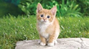 Kedi köpek haklarında devrim
