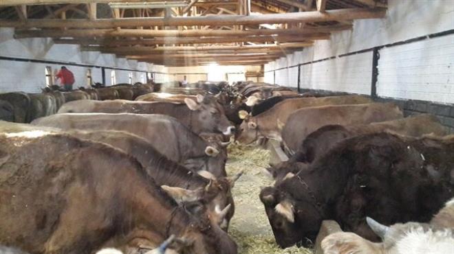 Canlı hayvan ihracatı artıyor