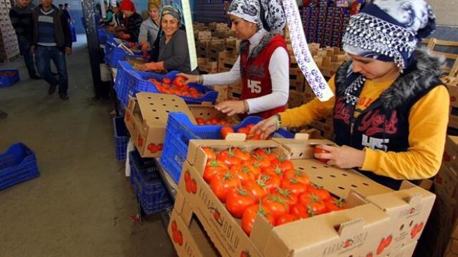 Noel ve ruble domatesi vurdu