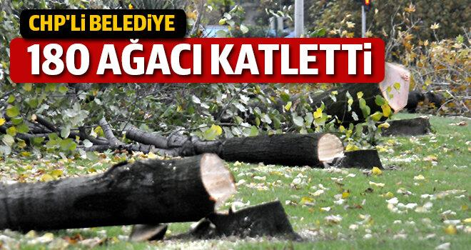 chpli-belediye180-agaci-katletti