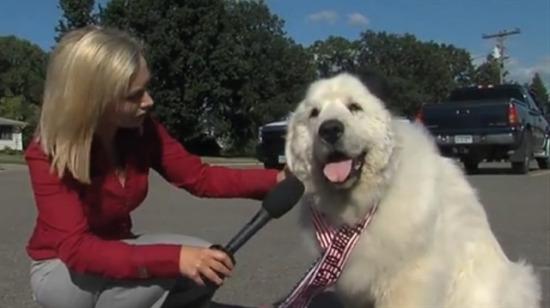"""Kasabanın """"köpek"""" belediye başkanı Duke sandıktan 3'üncü kez zaferle çıktı"""