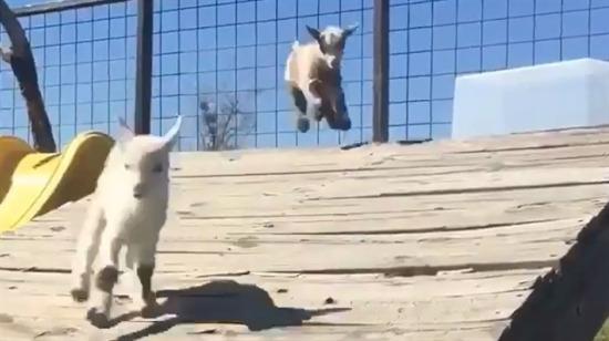 Acilen kuzu sahiplendirme platformu açılmalı