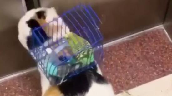 Kuzuyu kurda emanet etmek