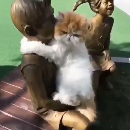 Çocuk heykeliyle aşk yaşayan kedi
