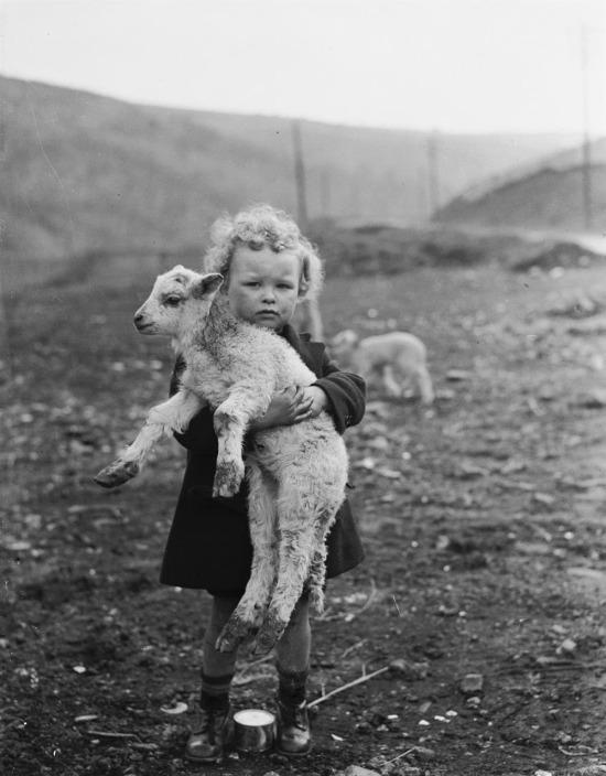 Galli bir erkek çocuğu ve kuzu, 1936