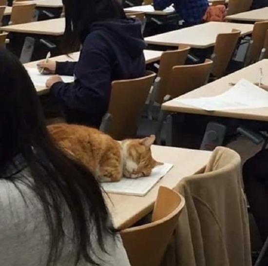 Evladım kaldırın şu kediyi dersi dinlesin