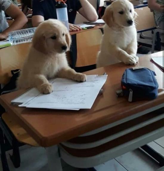 Hocam ödev vermiştiniz