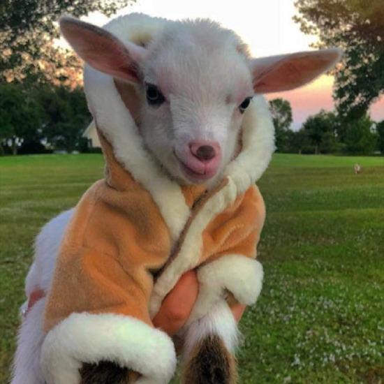 Havalar soğudu kalın giymek lazım