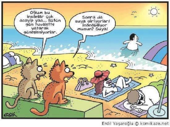 Kedilerin gözünden
