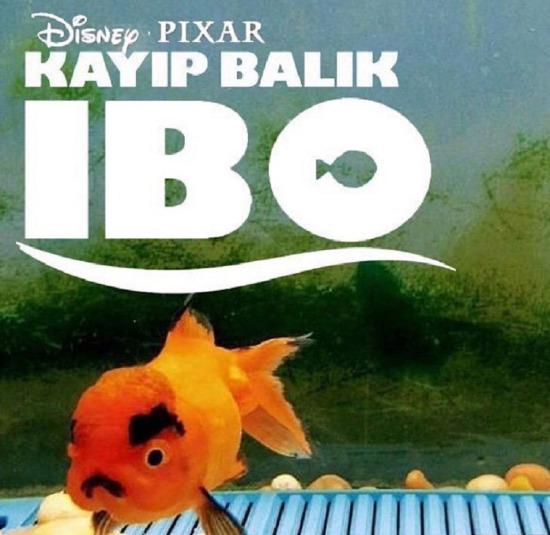 Kayıp Balık İBO