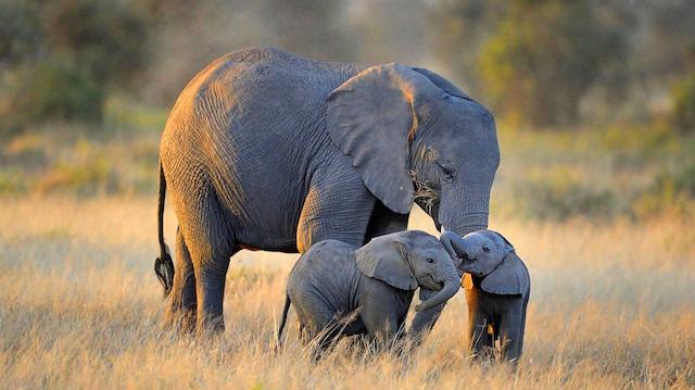 Doğadaki en 'gösterişli' hayvanlarını merak ediyor musunuz?