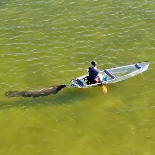 Kürekler opsiyonel: Kanoyu iten denizayısı drone kamerasında